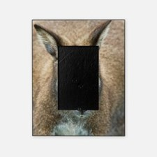 Red-necked wallaby Picture Frame