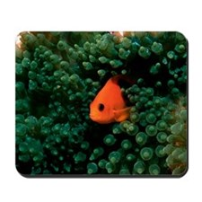 Red saddleback anemonefish Mousepad