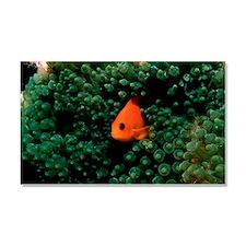 Red saddleback anemonefish Car Magnet 20 x 12