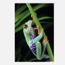 Red-eyed tree frog Postcards (Package of 8)