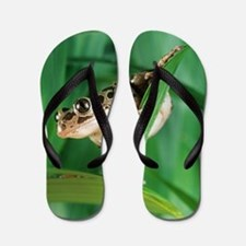 Red-legged pan frog Flip Flops