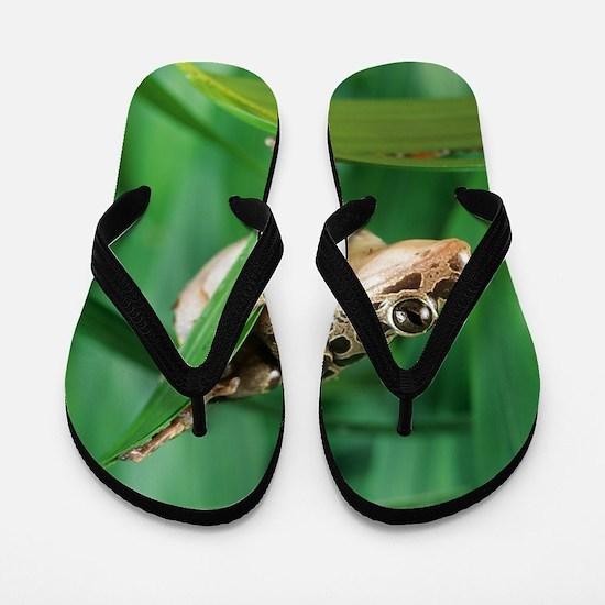 Red-legged pan frog Flip Flops