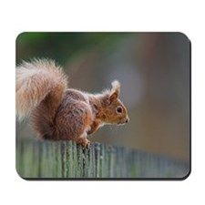 Red squirrel Mousepad