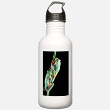 Red-eyed tree frogs Water Bottle