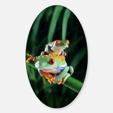 Red-eyed tree frogs Decal