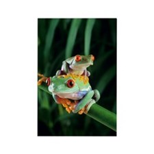 Red-eyed tree frogs Rectangle Magnet