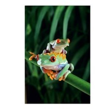 Red-eyed tree frogs Postcards (Package of 8)