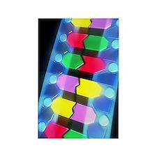 DNA molecule Rectangle Magnet