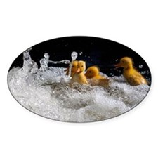 Ducklings swimming Decal