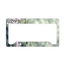 Cherries and apples and pears License Plate Holder