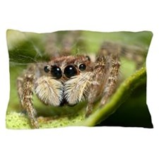Jumping spider close up Pillow Case