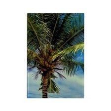 Beach on palm tree and two beach  Rectangle Magnet