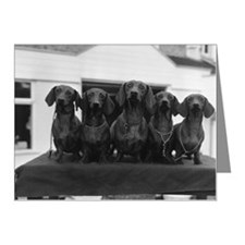 Dachshunds Note Cards (Pk of 10)