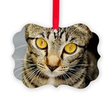 Cat with the mesmerizing eyes. Jo Ornament