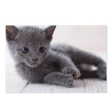 Russian blue lying down o Postcards (Package of 8)