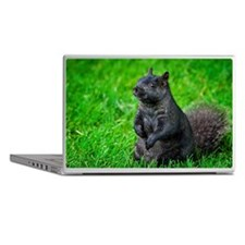 Black squirrel Laptop Skins
