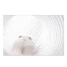 White mouse in tube, rear Postcards (Package of 8)