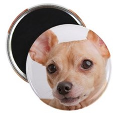 Portrait of small dog Magnet