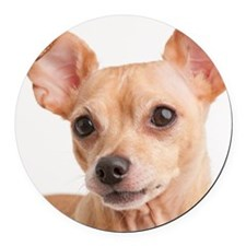 Portrait of small dog Round Car Magnet