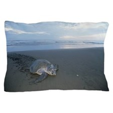 Olive Ridley Sea Turtle Lepidochelys o Pillow Case