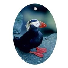 Sittin Puffin Oval Ornament