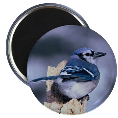 Young Blue Jay Magnet