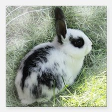 "Cute Bunny Square Car Magnet 3"" x 3"""
