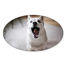 Dog catching food in mouth Decal