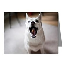 Dog catching food in mouth Note Cards (Pk of 10)