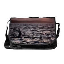 Orca whale Orcinus orca surfacing at Messenger Bag