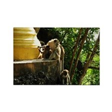 Macaques monkeys sitting on golde Rectangle Magnet