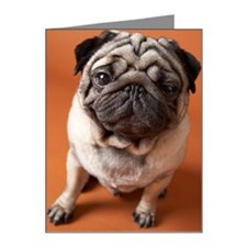 Dog Note Cards (Pk of 20)