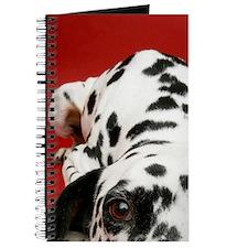 Dalmatian lying down Journal