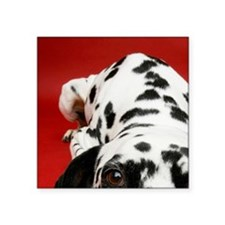 "Dalmatian lying down Square Sticker 3"" x 3"""