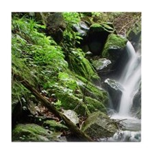 Waterfall in forest, Nagano, Japan. Tile Coaster