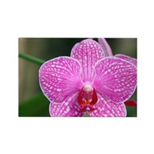 Close-up of orchid Rectangle Magnet