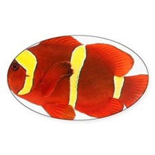 Spine-cheek anemonefish Premnas bia Decal