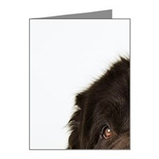 Newfoundland looking at came Note Cards (Pk of 20)