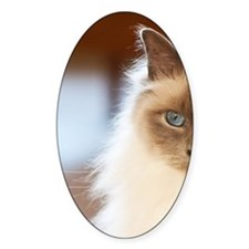 Sacred birman cat with blue eyes si Decal