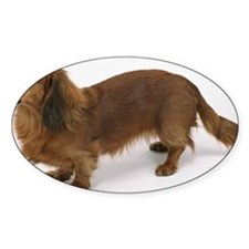 Brown dachshund standing Decal