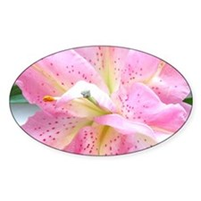 Asiatic lily 255 Decal