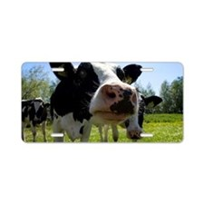 A Dutch cow is looking curi Aluminum License Plate
