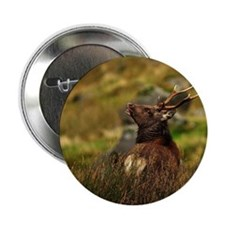 """Wicklow sika stag 2.25"""" Button"""