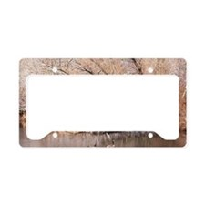 Two Canada geese Branta canad License Plate Holder