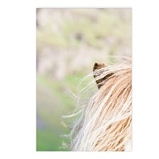 Iclandic horse on pasture Postcards (Package of 8)