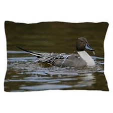 Male northern pintail duck Anas acuta  Pillow Case