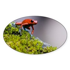 Strawberry Poison-dart frog Dendrob Decal