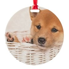 The Shiba Inu is the smallest of th Ornament