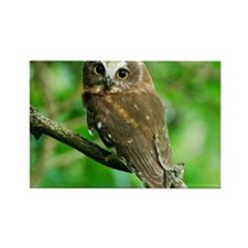 Juvenile Northern Saw-whet owl wi Rectangle Magnet