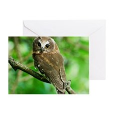 Juvenile Northern Saw-whet owl with  Greeting Card